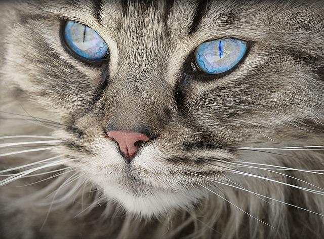 kočičí oči.jpg