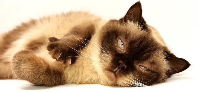 zamračená kočka.jpg
