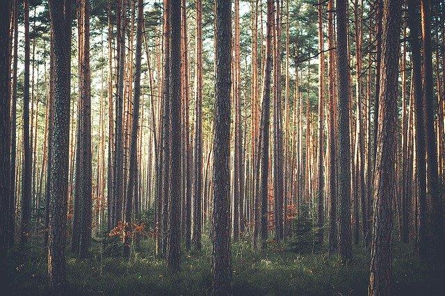 trees-1209088_640